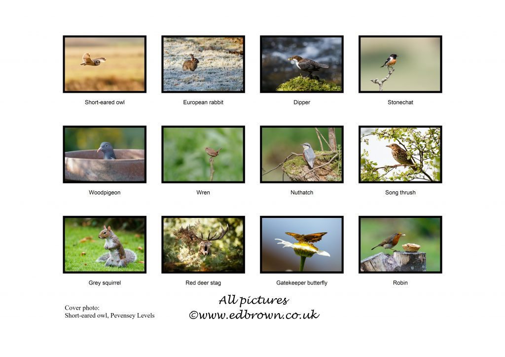 2018 UK wildlife calendar